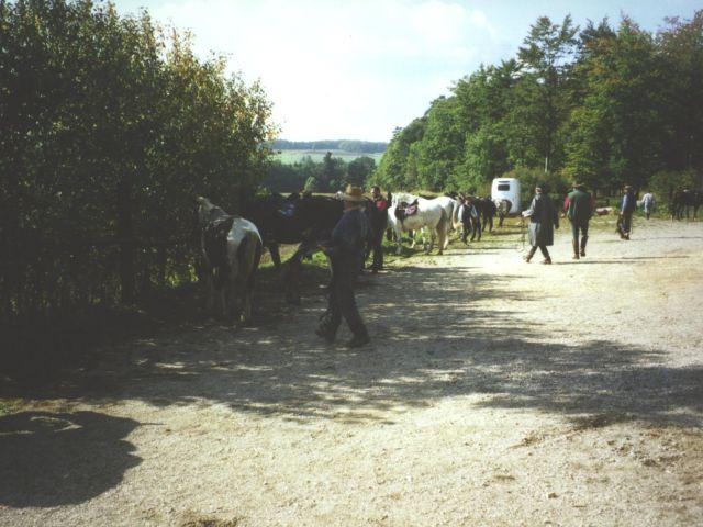 pferde am haus
